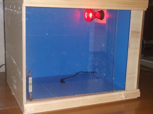costruzione camera calda : Quaglie, starne, pernici