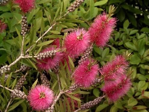 Erbe prative e fiori for Fiori estivi perenni